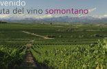 ¿Por qué no hacer enoturismo en Semana Santa? Visita Barbastro ruta del vino1 156x100