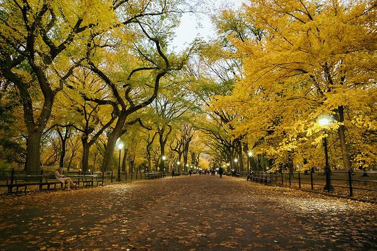 """""""El otoño es uno de los mayores espectáculos de la naturaleza y uno de los menos apreciados.""""  12 transformaciones que te muestran la belleza del otoño transformaciones en otono 11"""