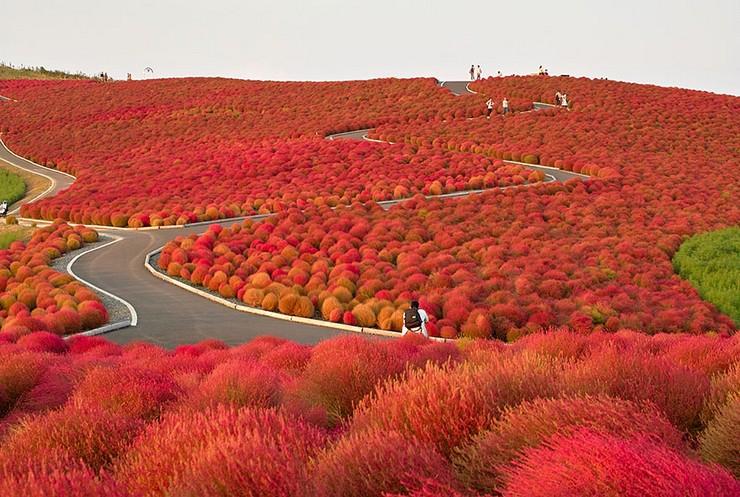 """""""El otoño es uno de los mayores espectáculos de la naturaleza y uno de los menos apreciados.""""  12 transformaciones que te muestran la belleza del otoño transformaciones en otono 13"""