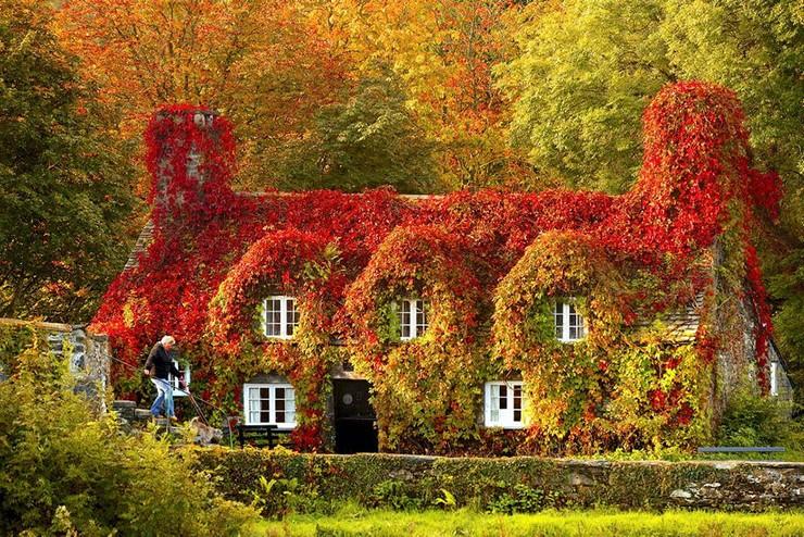 """""""El otoño es uno de los mayores espectáculos de la naturaleza y uno de los menos apreciados.""""  12 transformaciones que te muestran la belleza del otoño transformaciones en otono 2"""