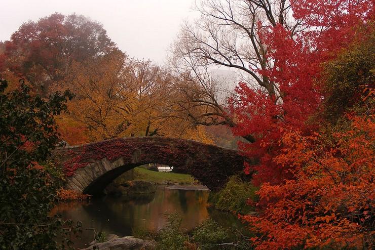 """""""El otoño es uno de los mayores espectáculos de la naturaleza y uno de los menos apreciados.""""  12 transformaciones que te muestran la belleza del otoño transformaciones en otono 4"""