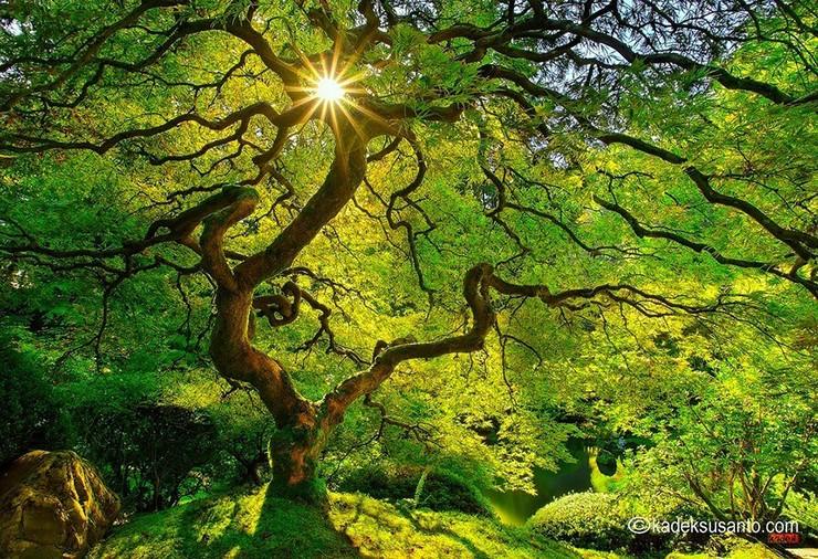 """""""El otoño es uno de los mayores espectáculos de la naturaleza y uno de los menos apreciados.""""  12 transformaciones que te muestran la belleza del otoño transformaciones en otono 5"""