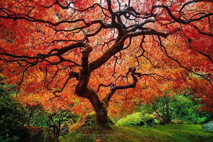 """""""El otoño es uno de los mayores espectáculos de la naturaleza y uno de los menos apreciados.""""  12 transformaciones que te muestran la belleza del otoño transformaciones en otono 6"""