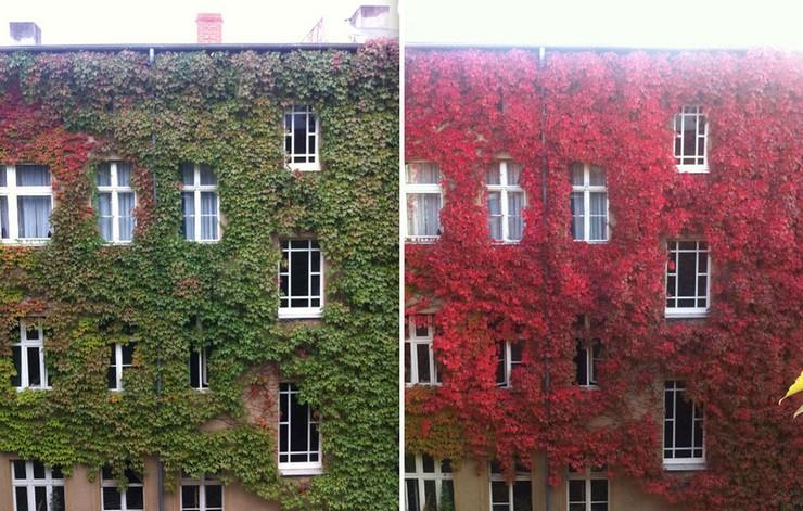 """""""El otoño es uno de los mayores espectáculos de la naturaleza y uno de los menos apreciados.""""  12 transformaciones que te muestran la belleza del otoño transformaciones en otono 7"""