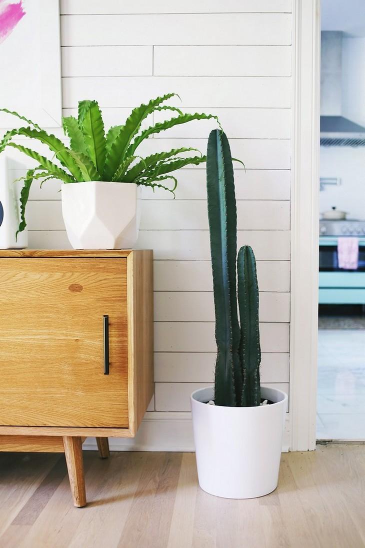 Tendencias de Verano: las nuevas colores para tú casa tendencias de verano Tendencias de Verano: las nuevas colores para tú casa plants