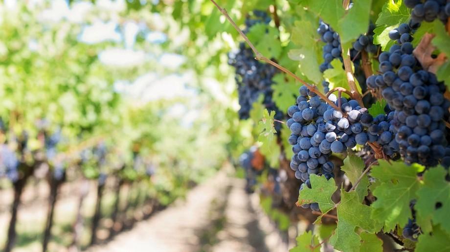 Misterios de Portugal: Los sitios lujosos de viño y para comer sitios lujosos Misterios de Portugal: Los sitios lujosos de viño y para comer Featured 13 1