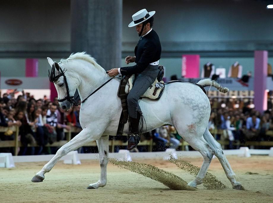 Eventos de lujo: Semana del caballo en Madrid eventos de lujo Eventos de lujo: Semana del caballo en Madrid dgs1472